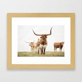 Longhorn Gerahmter Kunstdruck