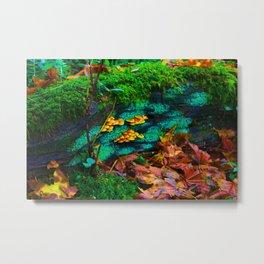 tillamook forest oregon Metal Print