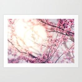 Flower Sunrise Art Print