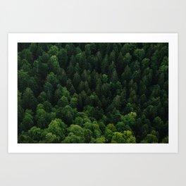 Swiss forest Art Print