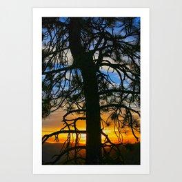Sunset Through The Pines   Art Print