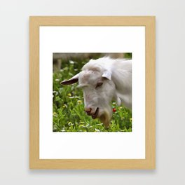 Goat A Load To Talk About Framed Art Print