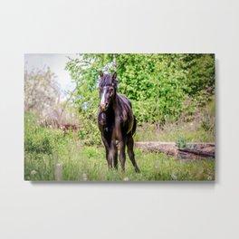 Dark bay horse Metal Print