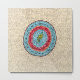 Growing - Hoya - plant cell embroidery Metal Print