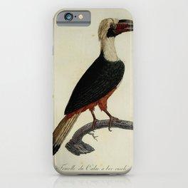 Hornbill 0118 iPhone Case