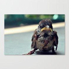 Poor Birdy Canvas Print