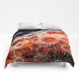 Strawberry Anemone Comforters