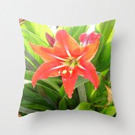 Orange Amaryllis Flower Blooms in Springtime  Throw Pillow