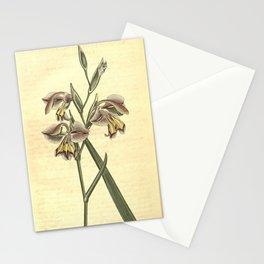 Flower 688 gladiolus viperatus Perfumed Corn Flag10 Stationery Cards