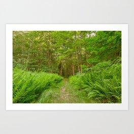 Summer Fern Trail Art Print