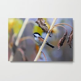Chickadees, Lockport NY Metal Print