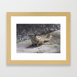 The Chipper Chipmunk Framed Art Print