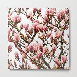 Tulip magnolia Metal Print