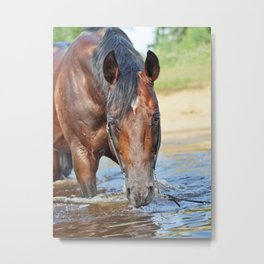 horse collection. swimm Metal Print