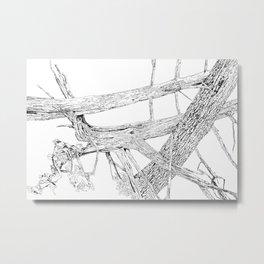 tangled cedars Metal Print