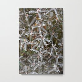 Frosted Stars Metal Print