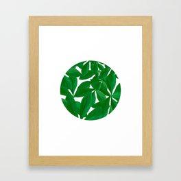 Summer Fresh Green Leaf White Background #decor #society6 #buyart Framed Art Print