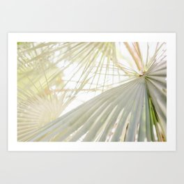 Palm Trees 3 Art Print
