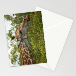 southafrica ... let's snack! Stationery Cards