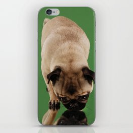 Pug Lara. iPhone Skin