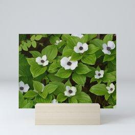 Tongass Trillium Mini Art Print