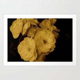 Sepia Rose Art Print