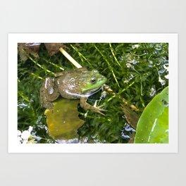 Frog in pond Art Print