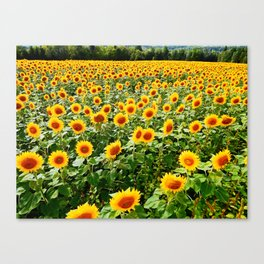Field of Sunny Flowers Canvas Print