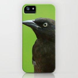 Black Bird Common Grackle iPhone Case