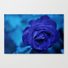 Blue Rose With Rain Drops Canvas Print