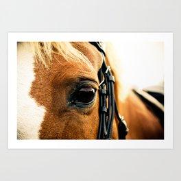 a horse's kind eyes. Art Print