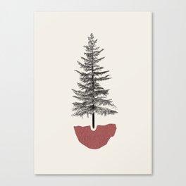 Fir Pine Canvas Print