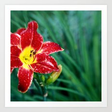 Lily Rain Drops in Red - A macro image with bokah Art Print