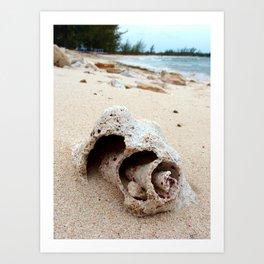 Conch on Bahama Beach Art Print
