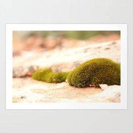 Sandstone and Moss Art Print