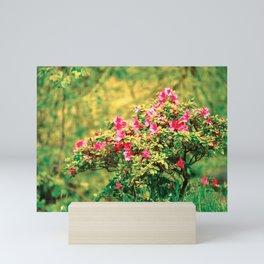 Azalea blooming Mini Art Print