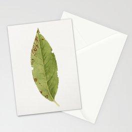 Vintage peach leaf Stationery Cards
