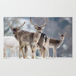 FALLOW DEER ON SNOWY GROUND Rug