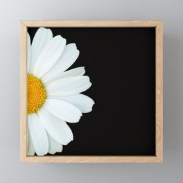 Hello Daisy - White Flower Black Background #decor #society6 #buyart Framed Mini Art Print