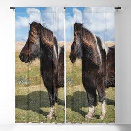 Dartmoor Pony Blackout Curtain
