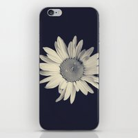 daisy iPhone & iPod Skins featuring Daisy  by Marianne LoMonaco