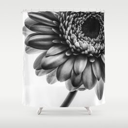 Gerbera 1 Shower Curtain