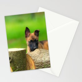 Cute Malinois Dog after the wood Stationery Cards