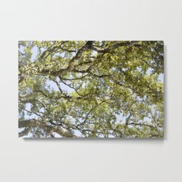 Breathe In and Look Up Metal Print