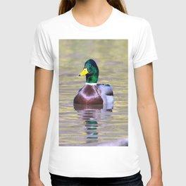 Male Mallard Duck T-shirt