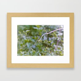 Growth and Transformation Framed Art Print