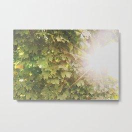 Sun in Leaves Metal Print