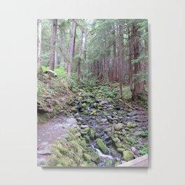 Sol Doc Falls Trail, mossy rocks Metal Print
