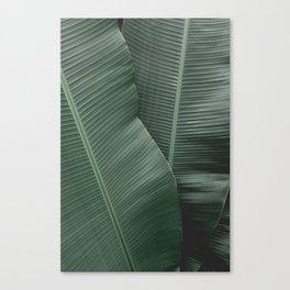 Green textures Canvas Print