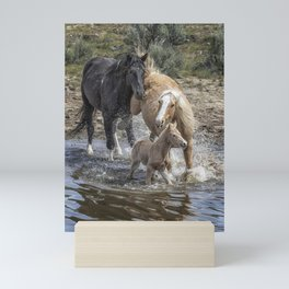 Fending Off Another Mustang to Protect Her Foal Mini Art Print